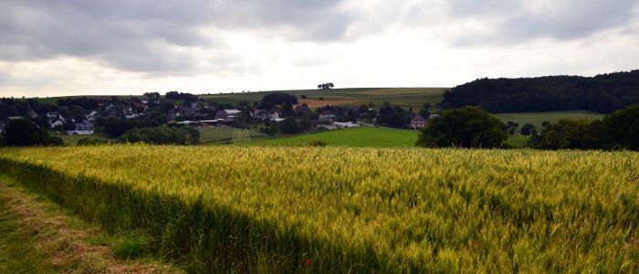 cornfield-slider